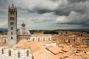 Swifts (Apus apus) flying over the Duomo, Siena UNESCO World Heritage Site, Italy. June.  -  Graham Eaton