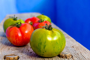 Red and green tomatoes (Solanum lycopersicum) on wooden board, France  -  Klein & Hubert