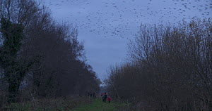 Birdwatchers waiting to watch a murmuration of Common starlings (Sturnus vulgaris) at dusk, Ham Wall RSPB Reserve, Somerset Levels,  England, UK, December.  -  John Waters