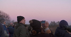 Birdwatchers watching a murmuration of Common starlings (Sturnus vulgaris), Ham Wall RSPB Reserve, Somerset Levels,  England, UK, December.  -  John Waters