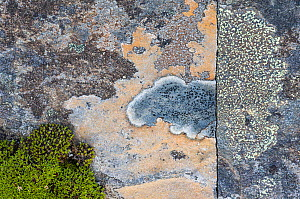 Crustose lichens (Lecanorales) on rocks in Swedish Padjelanta National Park, Laponia World Heritage Site, Sweden. August.  Highly commended in the GDT  European Wildlife Photographer of the Year  comp... - Erlend Haarberg