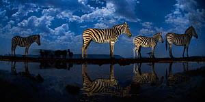 Zebra at waterhole at night, Mkuze, South Africa Third place in the Nature Portfolio category of the World Press Photo Awards 2017. - Bence Mate