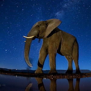 African elephant (Loxodonta africana) at waterhole at night, Mkuze, South Africa Third place in the Nature Portfolio category of the World Press Photo Awards 2017. - Bence Mate