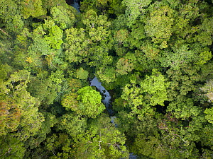 Batang Toru forests, North Sumatra, Indonesia.  This forest is home to a newly identified species of orangutan, the Tapanuli Orangutan (Pongo tapanuliensis) with a population of about 800 individuals. - Andrew Walmsley