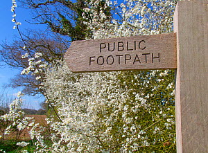 Footpath sign in Norfolk countryside with Blackthorn hedgerow (Prunus spinosa) in flower. Norfolk, England, UK. April.  -  Ernie  Janes