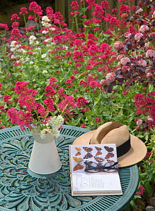 Red valerian (Centranyhus ruber) in jug on garden table and insect book. England, UK. - Ernie  Janes