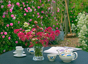 Table with tea set and vase of Red valerian (Centranthus ruber) and Climbing roses (Rosa sp) in the background. England, UK.  -  Ernie  Janes