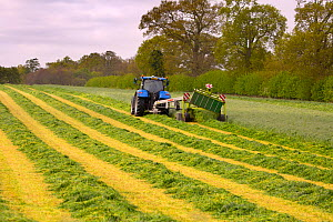 Cutting grass for silage with cutter pulled by tractor, Norfolk, England, UK, May.  -  Ernie  Janes