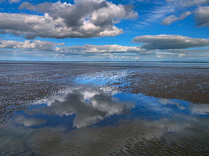 View across the Solway Firth towards the Lake District,Rockcliffe Dumfries, Scotland, UK, June 2017.  -  Ernie  Janes