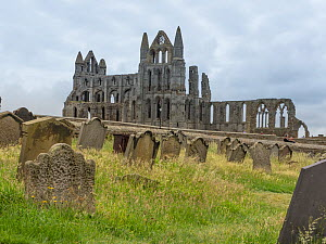 View of Whitby Abbey, North Yorkshire, England, UK. June. - Gary  K. Smith