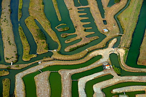 Aerial view of fish farm, La Guittiere Marsh, South Vendee, France, July 2017. - Loic  Poidevin