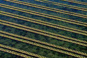 Rows of racks used in oyster farming at high tide, Isle de Re, Charente-Maritime, France, July 2017. - Loic Poidevin