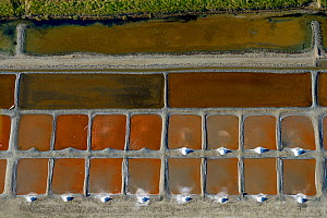 Salt evaporation ponds on Ile de Re, Charente-Maritime, France, Atlantic Coast. July 2017. The colours are produced by the concentration of algae or halobacteria that live in the ponds which indicates...  -  Loic  Poidevin