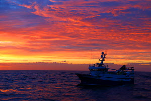 """Fishing vessel 'Ocean Harvest """" at sunset on a July evening. North Sea, August 2016.  Property released.  -  Philip  Stephen"""