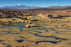 Bofedales, high altitude wetlands,  near Quetena, Altiplano, Bolivia, May 2017.  -  Bernard Castelein