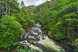 Glaslyn River flowing through the Aberglaslyn Pass, looking north from the bridge near Nantmor, south of Beddgelert, North Wales, UK, June 2017  -  Alan  Williams
