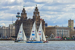 Clipper Round the World Race 2017-18 showing 3 yachts passing the Liver Building on the Liverpool waterfront. Sunday 20th August 2017 just before the start of the race. Liverpool, Merseyside, UK  -  Alan  Williams