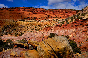 Sandstone cliffs in Long Canyon, Grand Staircase-Escalante National Monument, Utah, USA, March 2014.  -  Jouan Rius