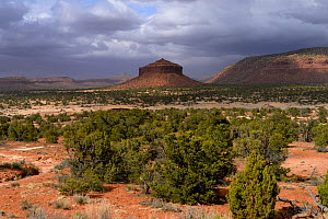 Cheese Box Butte, White Canyon Area, Utah, USA, March 2014. - Jouan Rius
