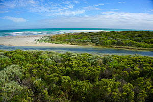 Creek flowing out of Piccaninnie Ponds into the sea. Spring-fed limestone ponds at the Piccaninnie Ponds Conservation Park South Australia, Australia March 2015 . Photographed for The Freshwater Proje... - Michel  Roggo