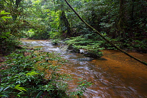 Long Lansat River, a tributary of the Lansat and Sungai Melinau River,  Gunung Mulu National Park, Sarawak, Borneo, Malaysia. Photographed for The Freshwater Project.  -  Michel  Roggo