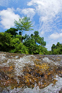 Low angle view of Sungai Melinau River, Gunung Mulu National Park, Sarawak, Borneo, Malaysia. Photographed for The Freshwater Project.  -  Michel  Roggo