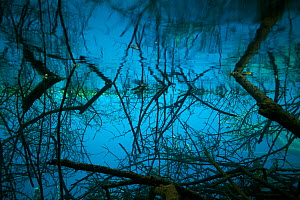Fallen trees in lake, Jiuzhaigou National Park, Jiuzhaigou National Park, Jiuzhaigou Valley Scenic and Historic Interest Area UNESCO World Heritage Site, Sichuan, China. May 2013. Photographed for The... - Michel  Roggo