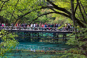 Visitors at Five Flower Lake, Jiuzhaigou National Park, Jiuzhaigou Valley Scenic and Historic Interest Area UNESCO World Heritage Site, Sichuan, China. May 2013. Photographed for The Freshwater Projec...  -  Michel  Roggo