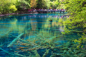 Visitors at Five Flower Lake, Jiuzhaigou National Park, Jiuzhaigou Valley Scenic and Historic Interest Area UNESCO World Heritage Site, Sichuan, China. May 2013 . Photographed for The Freshwater Proje... - Michel  Roggo