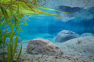 Underwater view of Wadi Shab, or Wadi Al Shab With aquatic plants and algae, Al Sharqiyah South Governorate, Sultanate of Oman, February 2015 . Photographed for The Freshwater Project - Michel  Roggo