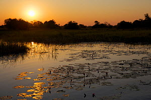 Channel of the Okavango Delta at sunset, Botswana,  June 2014 . Photographed for The Freshwater Project  -  Michel  Roggo