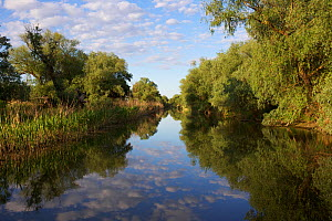 Gallery forest along the channels dominated by mainly Willows (Salix sp.) and Poplars (Populus sp.) Danube Delta Biosphere Reserve,  Danube Delta, Romania May 2015. Photographed for The Freshwater Pro...  -  Michel  Roggo