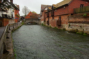River Itchen, chalk stream flowing through Winchester, Hampshire, England, UK, May. Photographed for The Freshwater Project. - Michel  Roggo