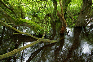 Candover Brook, tributary of the River Itchen, chalk stream Hampshire, England, UK. July. Photographed for The Freshwater Project.  -  Michel  Roggo