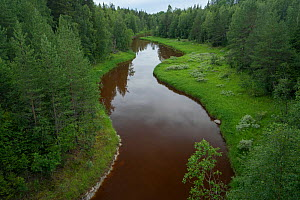 Vindel River tributary of the Ume River at Mardsele, Lapland, Sweden July 2016 . Photographed for The Freshwater Project - Michel  Roggo