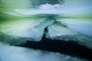 Underwater view of  at the end of the winter, with the slowly melting ice, Vindel River, tributary of the Ume River tributary, Lapland, Sweden March 2016 . Photographed for The Freshwater Project - Michel  Roggo