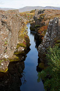 Rift between North American and Eurasian tectonic plates at Thingvellir, Thingvellir National Park, UNESCO World Heritage Site, Iceland. September. Photographed for the Freshwater Project.  -  Michel  Roggo