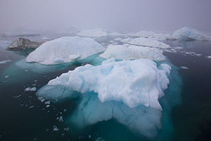 Iceberg in the sea outside the Kangia Ilulissat Icefjord, Icebergs from the Sermeq Kujalleq Glacier.Ilulissat Icefjord UNESCO World Heritage Site, Greenland. August 2014. Photographed for The Freshwat... - Michel  Roggo