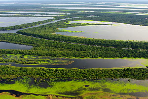 Aerial view of flooded forests, Anavilhanas Archipelago, Anavilhanas National Park,  Rio Negro, Amazonas, Brazil February 2011. Photographed for The Freshwater Project - Michel  Roggo