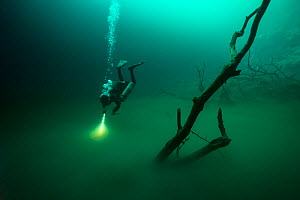 Person diving in Cenote Angelita, with a layer of hydrogen sulfate between the freshwater on the top and the seawater on the ground. Quintana Roo, Yucatan Peninsula, Mexico. Photographed for The Fresh...  -  Michel  Roggo