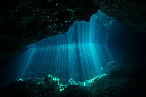 Sunrays in Cenote Jardin del Eden, Quintana Roo, Yucatan Peninsula, Mexico, May 2016. Photographed for The Freshwater Project - Michel  Roggo