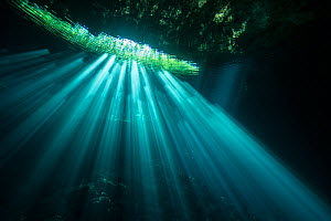 Sunrays in Cenote Jardin del Eden, Quintana Roo, Yucatan Peninsula, Mexico . Photographed for The Freshwater Project May 2016  -  Michel  Roggo