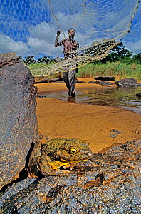 Man casting net to catch Goliath frog (Conraua goliath)  Sanaga, Cameroon. Hunted for bushmeat / food.  -  Daniel  Heuclin