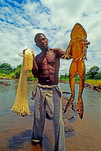 Man holding Goliath frog (Conraua goliath) and net, Sanaga, Cameroon. Hunted for bushmeat / food  -  Daniel  Heuclin
