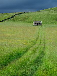 DIsused old dales barn in upland hay meadow, Upper Teesdale, Co. Durham, England, UK, June - Andy Sands