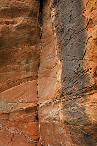 New red sandstone, cross-bedded sandstone, from the Triassic, Shropshire, England, UK, September.  -  John Cancalosi