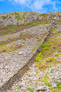 Hand stacked stonewalls separate landholdings and livestock, many dating back to the 1600's, Pared-y-cefn-hir, Snowdonia National Park, Wales, UK, August. - Phil Savoie