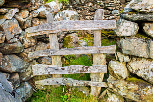 Wooden fence between dry stone wall, Pared-y-cefn-hir, Snowdonia National Park, Wales, UK, August. - Phil Savoie