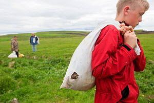 Boy  with bag of Common eider duck (Somateria mollissima) down collected from breeding birds, Flatey, Iceland.  Highly commended in the Man and Nature Category of Terre Sauvage Nature Images Awards 20... - Pal Hermansen