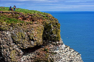 Birders at sea cliff top, home of seabird colony in breeding season in spring,  Fowlsheugh Coastal Nature Reserve, Kincardineshire, Scotland, UK, May  -  Philippe Clement